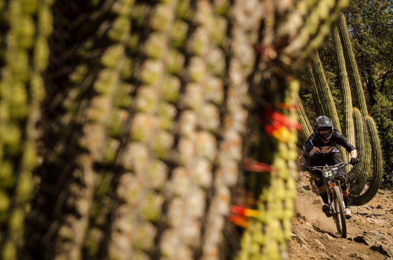 This is definitely something you don't want to crash into: a cactus. Photo by Dave. Trumpore