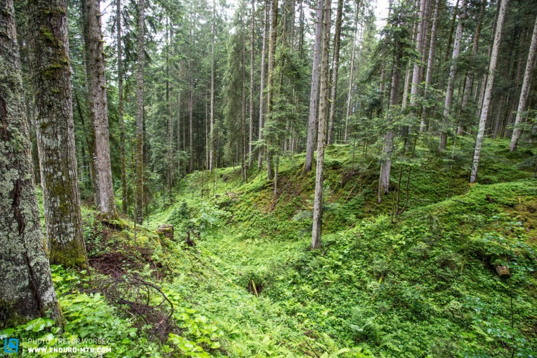 The alpine forest was an explosion of green