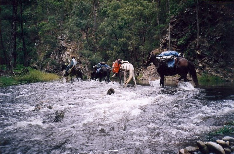 Using packhorses to access remote Wilderness is legal
