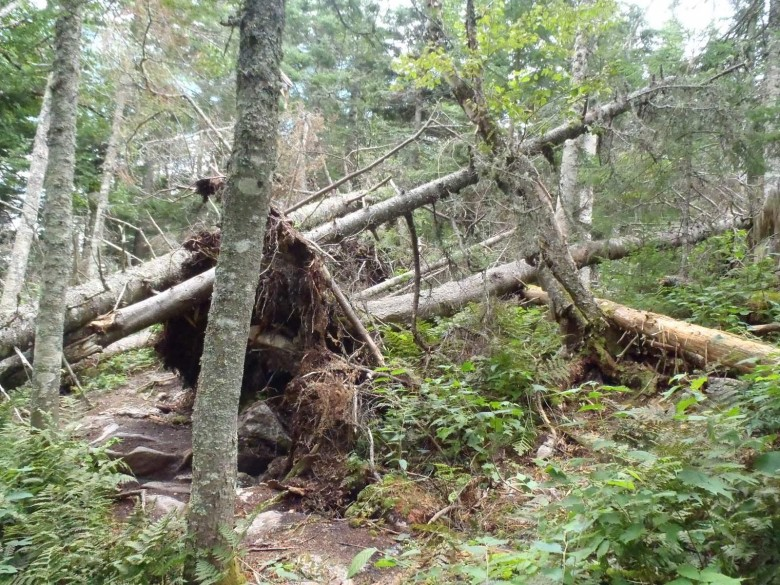 Blowdowns – trail maintenance with  hand tools of ancient pedigree is nearly impossible.